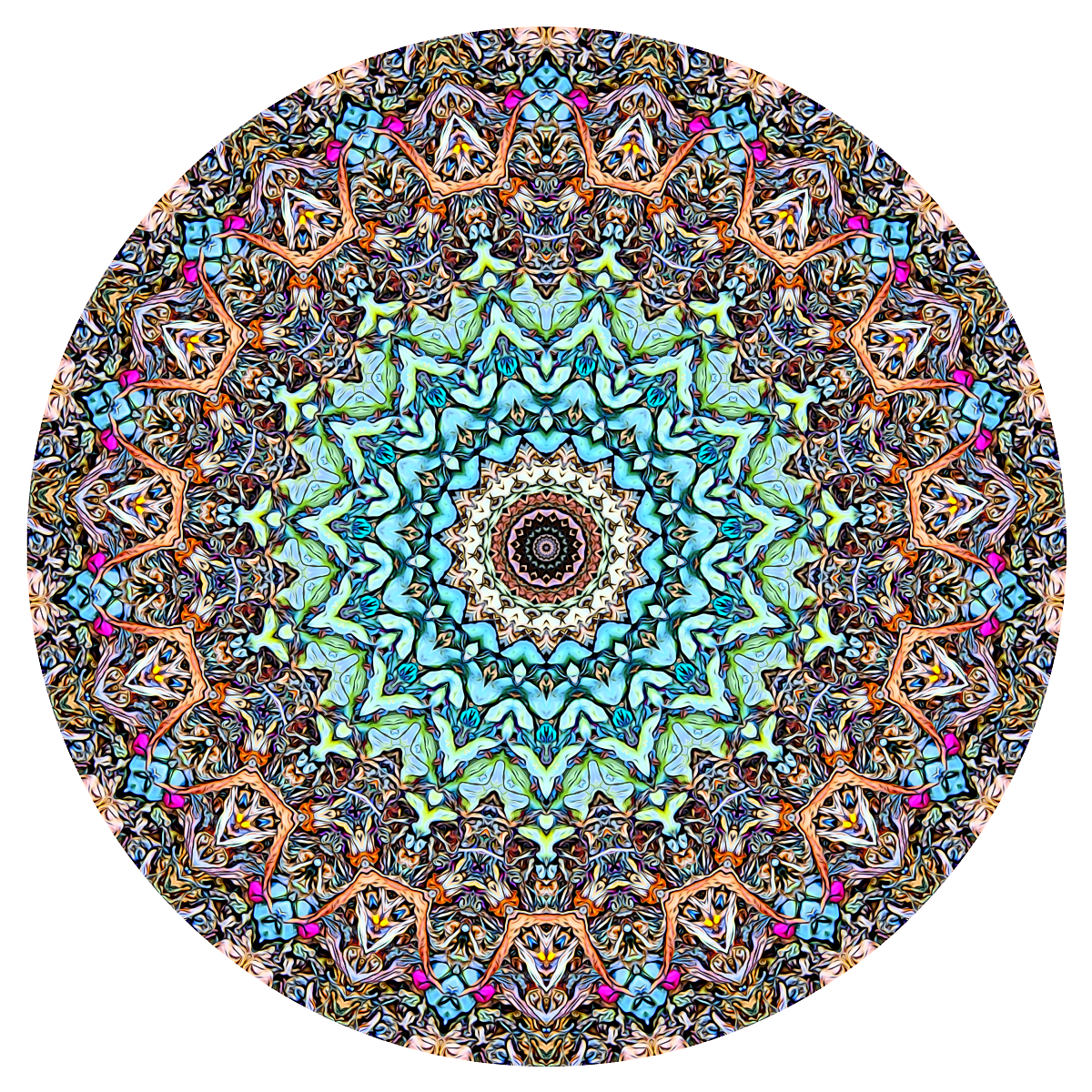 Career Mandala - stephen calhoun