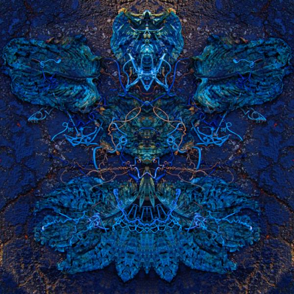 Knysna Blue Welcome - Stephen Calhoun