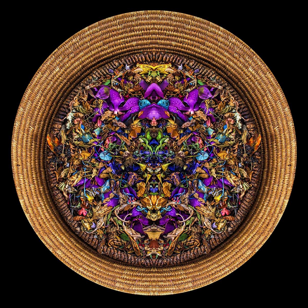 Dharma Home - Stephen Calhoun
