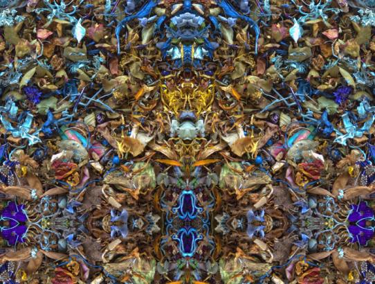 Symmetricavatina