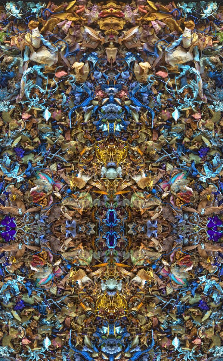 Symmetricavatina - Stephen Calhoun