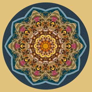 Top of the Pale Mandala - Stephen Calhoun