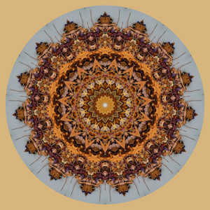 Crawling Mandala - Stephen Calhoun