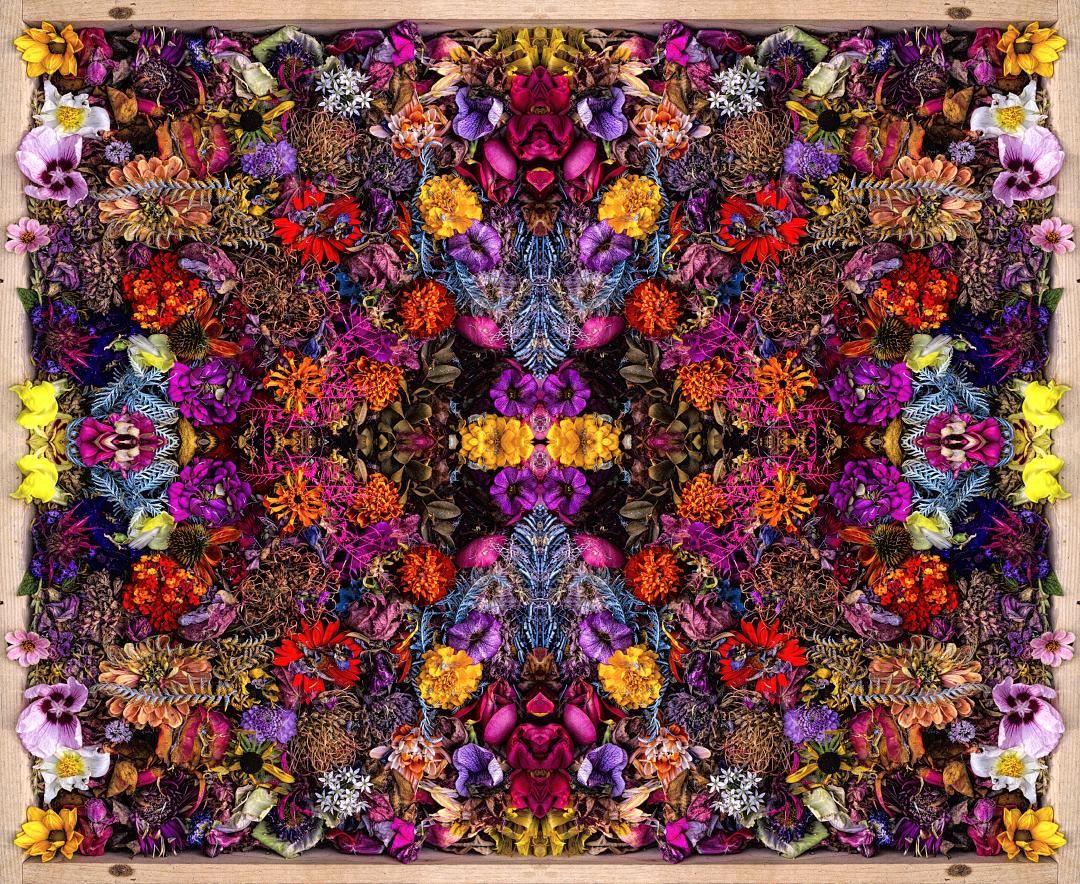 Color Trap II - Stephen Calhoun