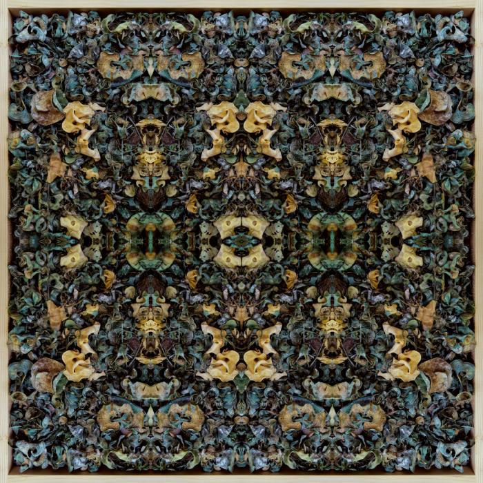 Nyphaeum - Stephen Calhoun art