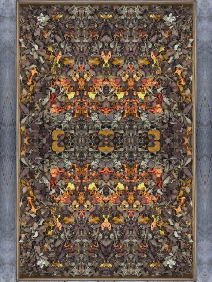 Trick Bag - Stephen Calhoun